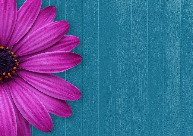 青い壁とピンクの花